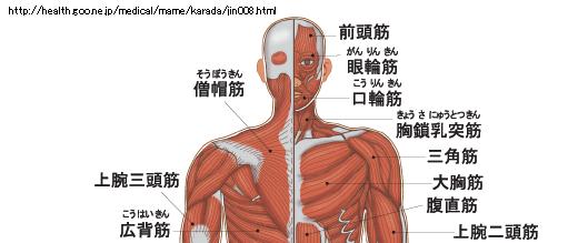 人体図(筋肉)