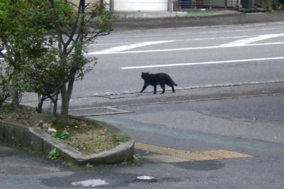 猫onボンネット4.jpg